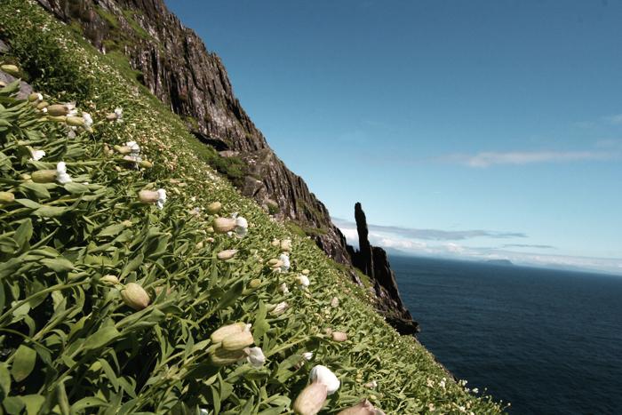 Ireland / Photo